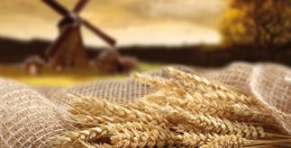 Pasten von organischen alten Körner