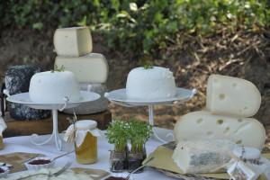 mangia-beve-formaggio-miele