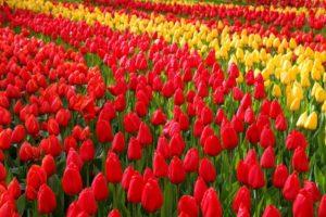 Aprile... si accendo i colori.